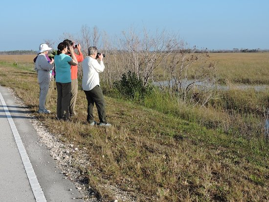 Walland, TN: Naturalist Adventure Tour to Everglades National Park, 2018