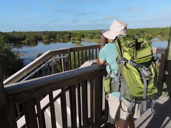 Walland, TN: Naturalist Adventure Tour to Everglades National Park, 2018