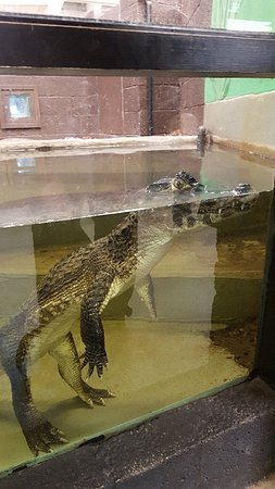 Crocodiles of the World: 20180225_113112_large.jpg