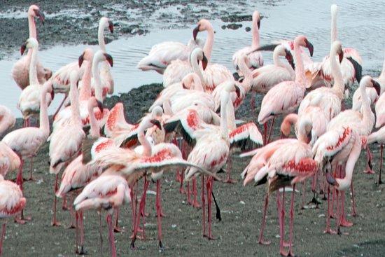 Arusha National Park: Flamingos