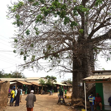 Shimoni, Kenya: the large Boabab tree marks the center of the village