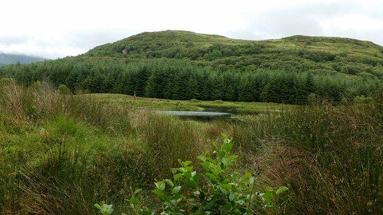 Duror, UK: Highland Titles Nature Reserve featuring Digitalis.