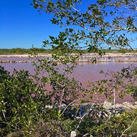 Telchac Puerto, Μεξικό: Красиво и очень необычное ощущение, что вода реально розовая. Здесь добывают соль, которую можно