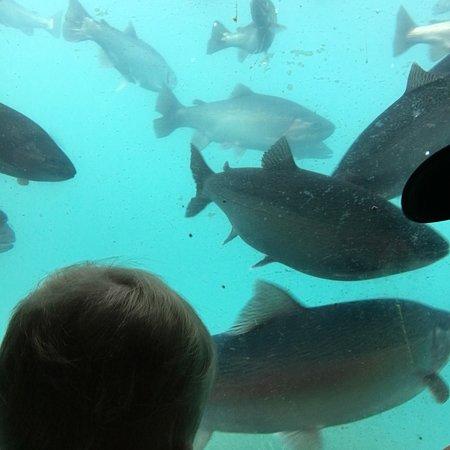 Queenstown Underwater Observatory: photo0.jpg