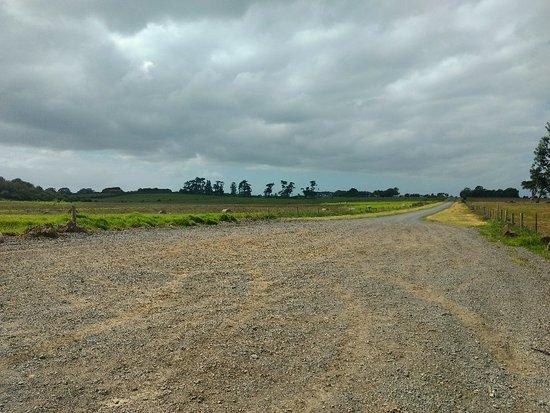 Otuataua Stonefields: IMG_20180303_153729252_large.jpg