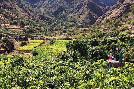 Coffee Plantation & Island Tour