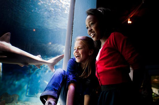 Mystic Aquarium General Admission...