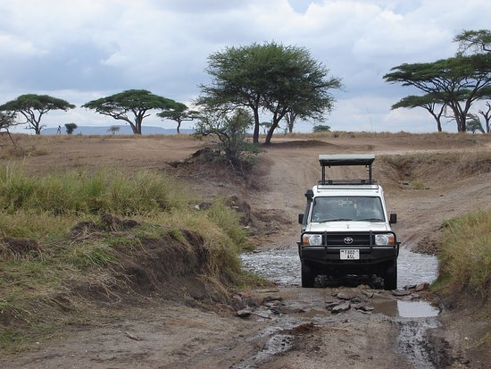 Masumin car hire & safaris