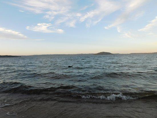 Lake Rotorua: lake
