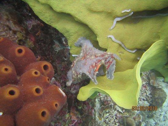 Philippine Fun Divers, Inc.: IMG_6502_large.jpg