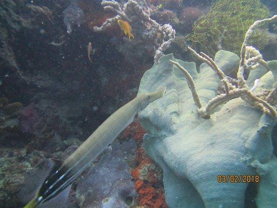 Philippine Fun Divers, Inc.: IMG_6460_large.jpg