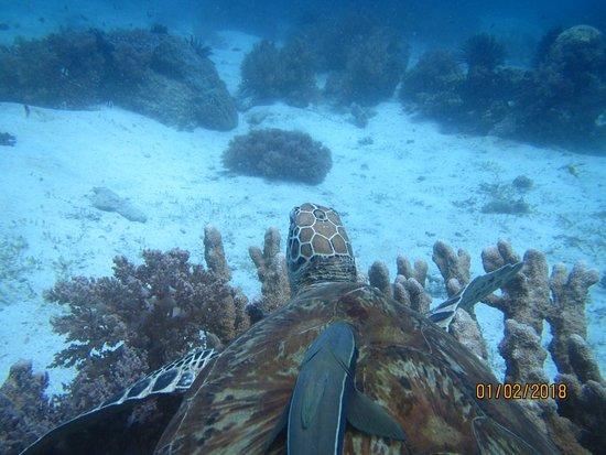 Philippine Fun Divers, Inc.: IMG_6273_large.jpg