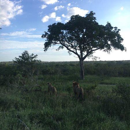 Londolozi Private Game Reserve: photo1.jpg
