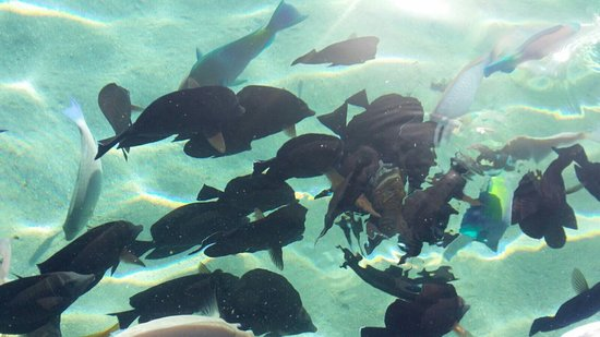 Sharm Smile Tour Φωτογραφία