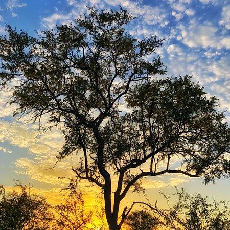 Частный заповедник Тимбавати, Южная Африка: photo9.jpg