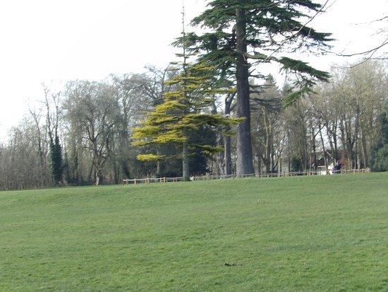 Lydiard Park: beautiful trees