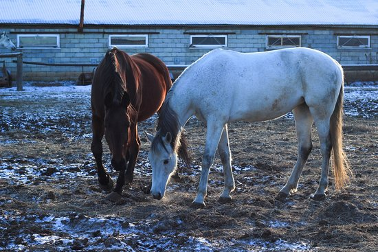 Volgograd Cossak Equestrian Club