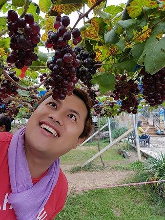 Mae Ai, Ταϊλάνδη: @ Hompandin Vineyard, Chiang Mai City, Thailand