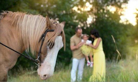 Solnechnaya Dolina Equestrian Club