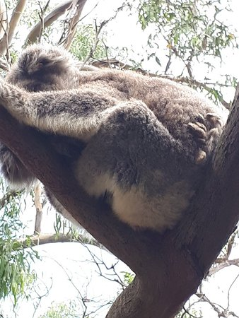 Cowes, Australien: 20180214_143207_large.jpg