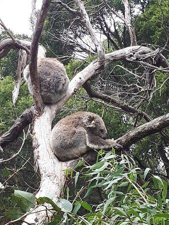 Cowes, Australien: 20180214_142444_large.jpg