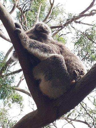Cowes, Australien: 20180214_143233_large.jpg