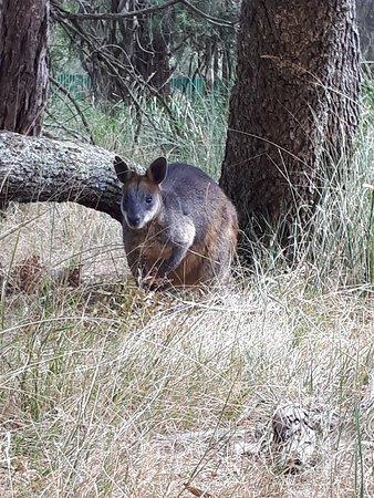 Cowes, Australia: 20180214_143645_large.jpg