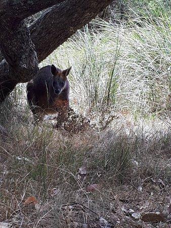 Cowes, Australia: 20180214_143759_large.jpg