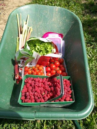 Jouy en Josas, França: Récolte