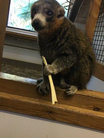 Linton Zoo ภาพถ่าย