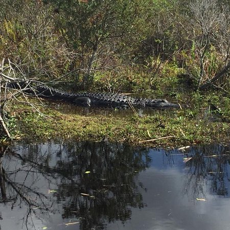 Kissimmee, FL: photo0.jpg