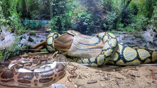 Guindy Snake Park