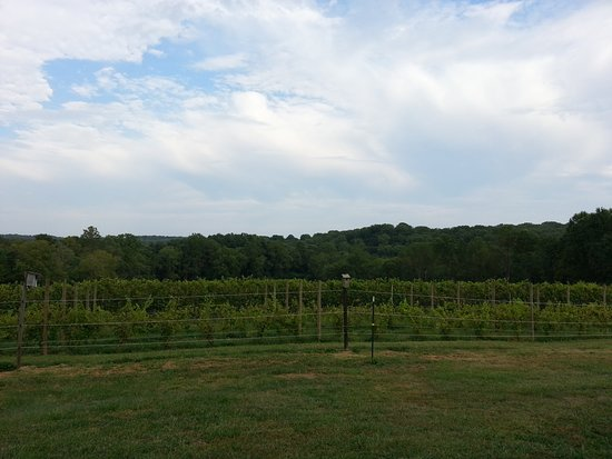 Landenberg, PA: Part of the Vinyard overlooking White Clay Creek Park.