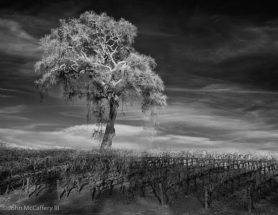 Opolo Vineyards : From Opolo's Looong driveway. (Captured in Infrared)