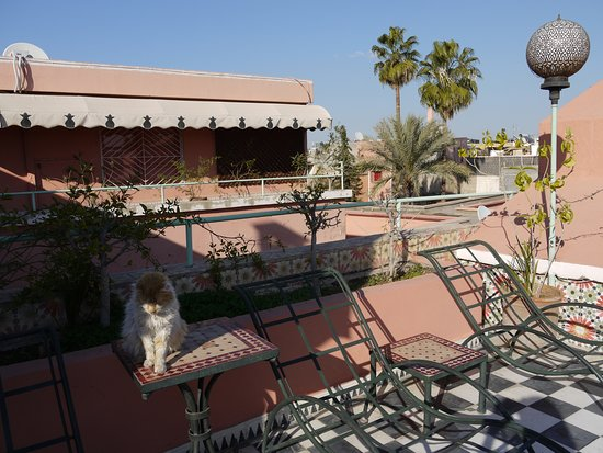 Le Gallia : View from the roof. Sweet resident cat! They have cushions for all of the chairs but it was morn