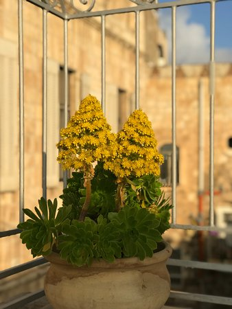 Ecce Homo Convent: Winter flowers on terrace