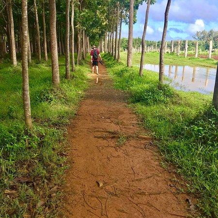 Kilauea, Havai: photo0.jpg