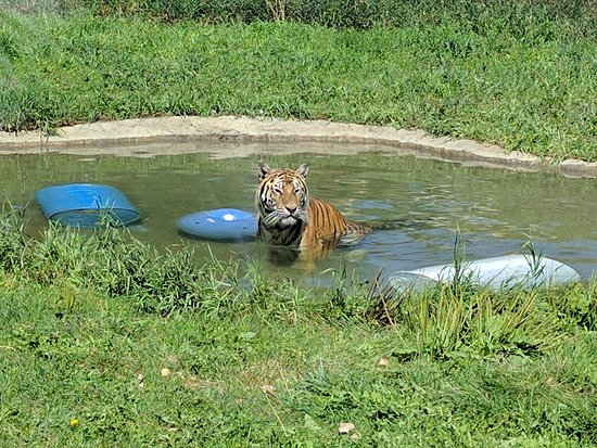 ZooMontana: Chillin' in the pool!