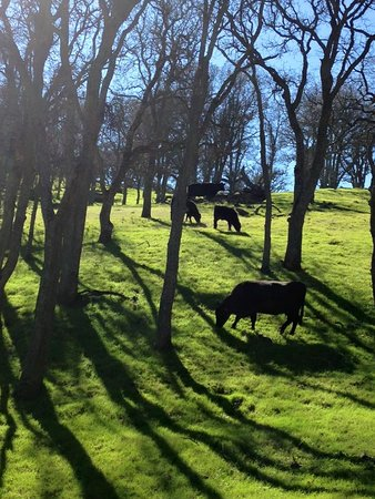 Round Valley Regional Preserve: you will meet a few cows along the way