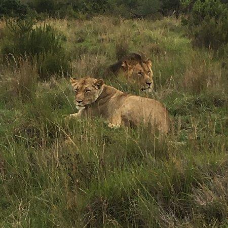 Lalibela Game Reserve: photo2.jpg