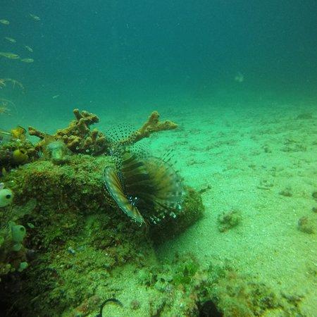 Picture of manta dive gili air resort gili - Manta dive gili air ...