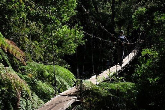 Patagonia Trails: Hanging bridge