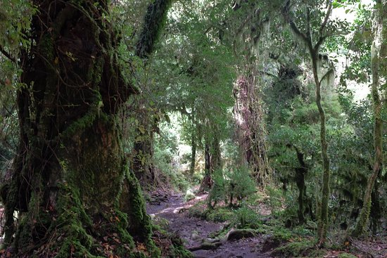 Patagonia Trails: the forest