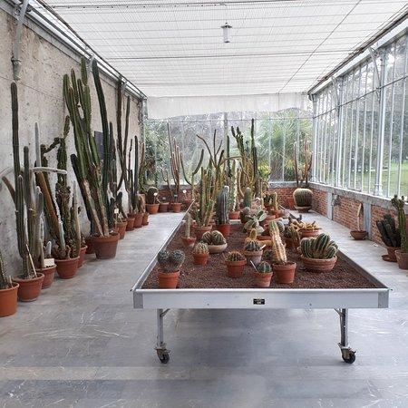 Jardin Massey: 20180301_092140_large.jpg