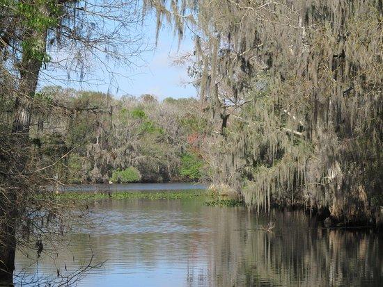 Chiefland, Флорида: Suwanee River