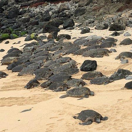 Paia, Havaí: photo0.jpg