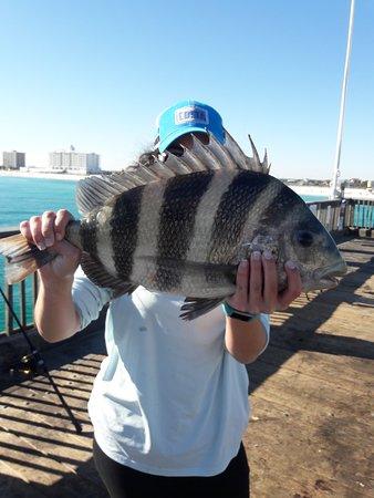 Pensacola Beach Gulf Pier Sheepshead Fish Amazing Catch