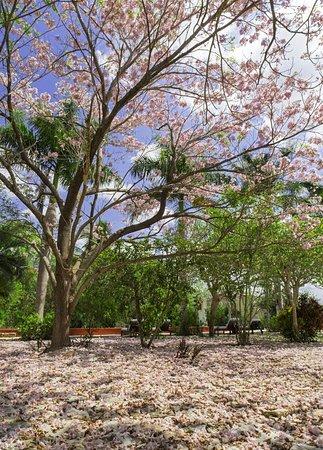 Tixkokob, México: Recreation