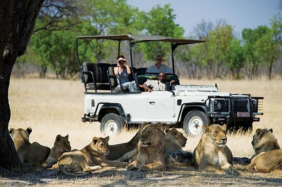 Hwange National Park Day Trip from