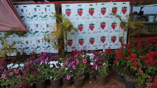 Img 20180303 172102 Large Jpg Picture Of Mapro Garden Gureghar Tripadvisor